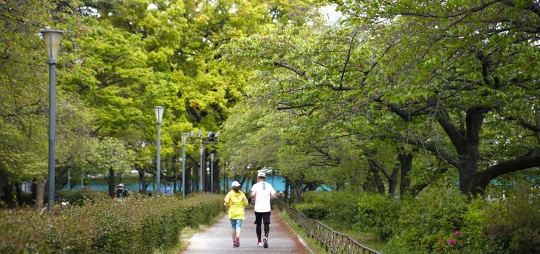 「徳島県」の小松海岸緑地ドッグランで年額30万円以上で募集中!(2019年4月26日〆切)
