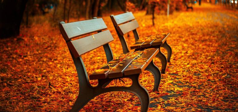 徳島県の「徳島県蔵本公園」について、ネーミングライツパートナーを1年間につき250万円以上で募集中!(2020年12月25日(金)〆切)